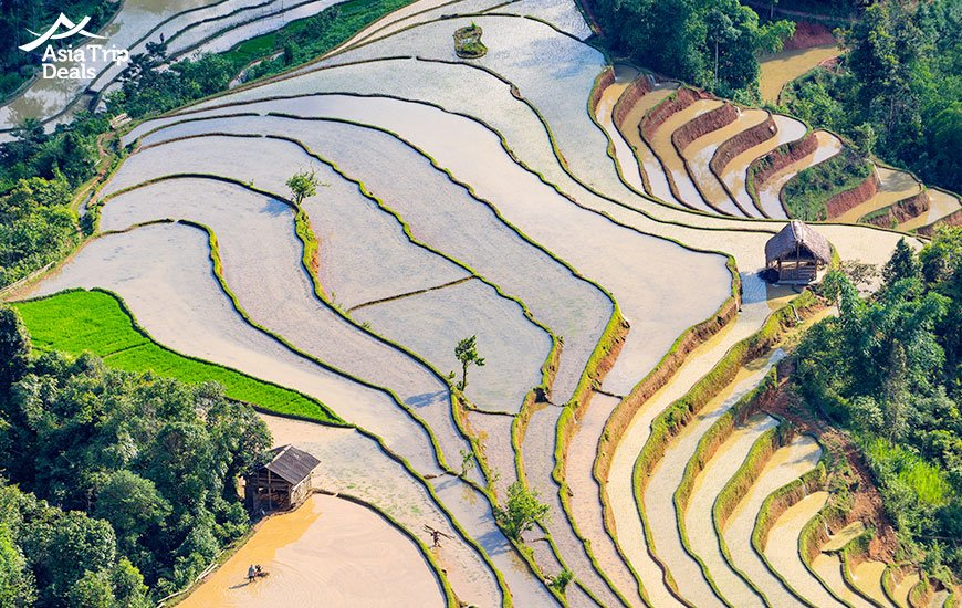 terrace rice field in water-pulling season in Hoang Su Phi