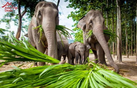 Luang Prabang – 01 Day Mahout Experience with Bathing