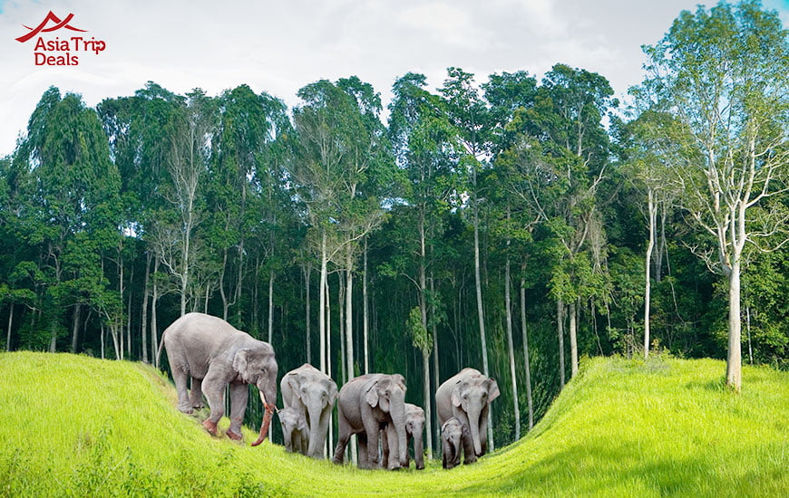 Elephants on Koh Chang island in Thailand