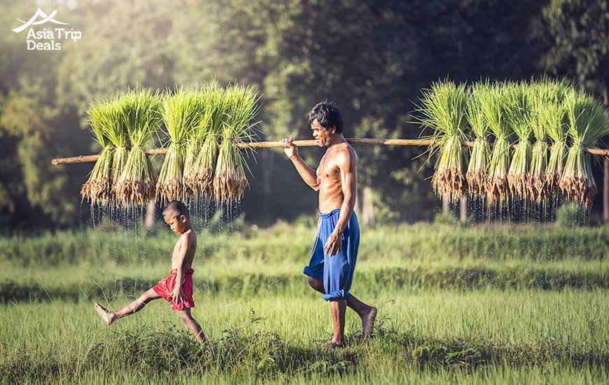 Farmers on the rice field in Cambodia