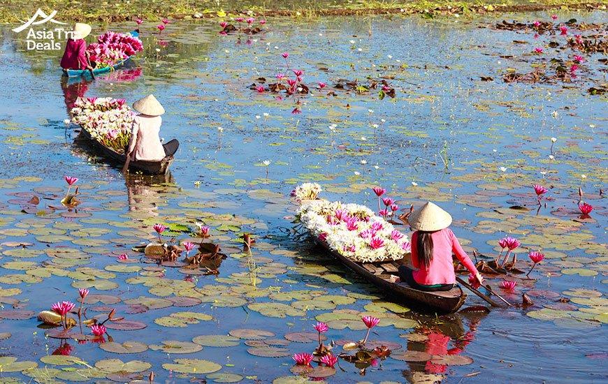 People harvesting water lilies on mekong river