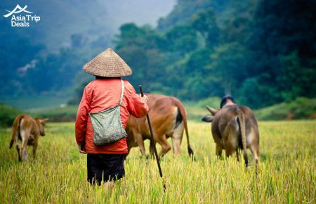 Vietnam In Style 15 days