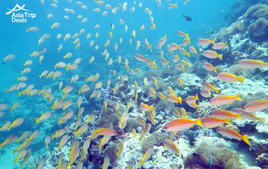 Coral reef around Phuket Thailand