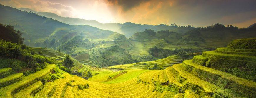 rice field terraces in Mu Cang Chai Yen Bai