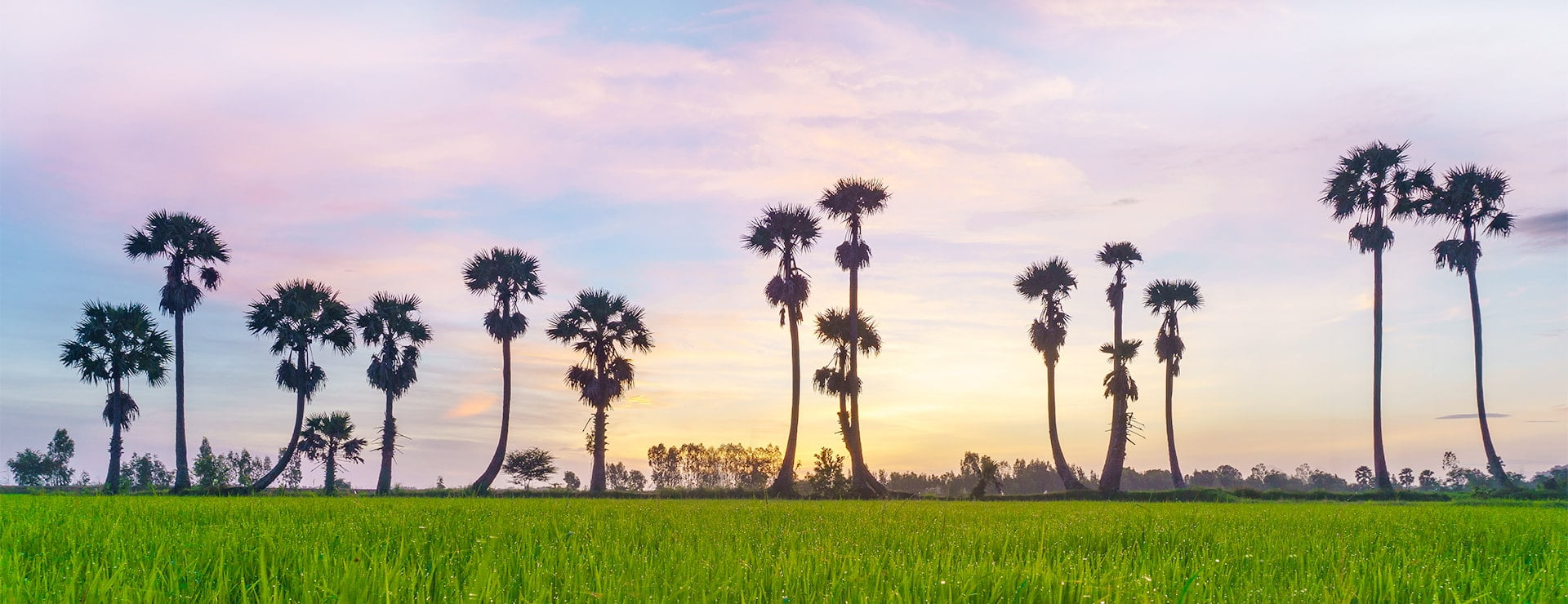 peaceful scenery of mekong delta vietnam