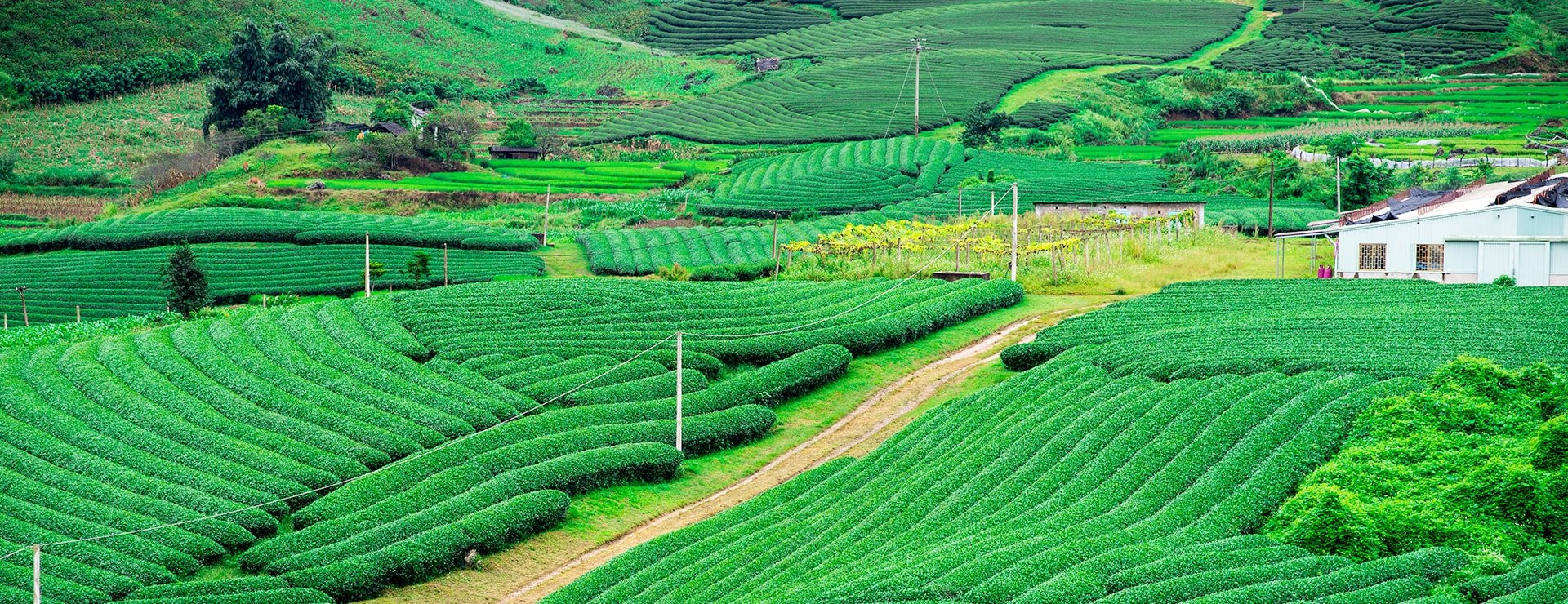 Northern Provinces In Vietnam That You Need To Visit In Late Autumn