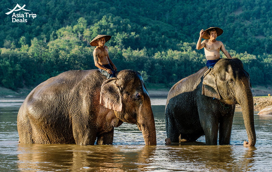 life with elephants in luang prabang