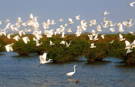 Hanoi: Day trip to Nam Dinh, Xuan Thuy National Park
