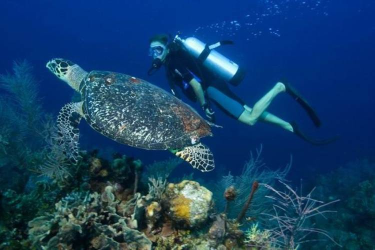 scuba diving in Phu Quoc
