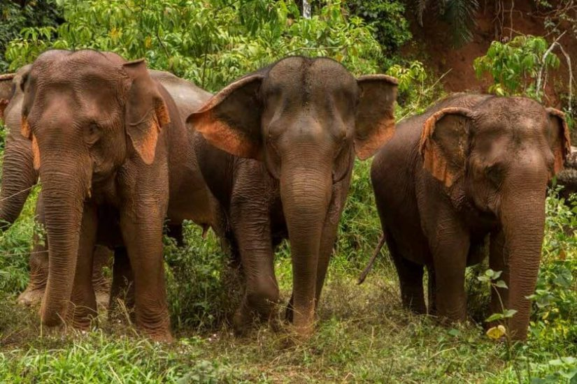 Elephant Valley Project, Mondulkiri