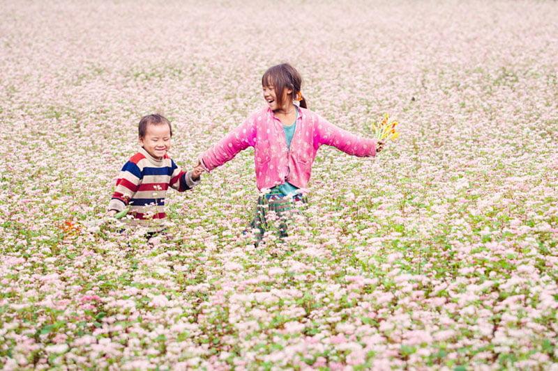 Ha Gaing buckwheat flower season